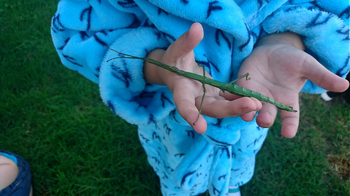 He found this huge stick insect!